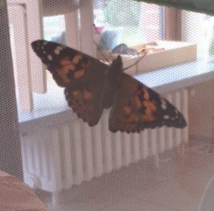 Von der Raupe zum Schmetterling – Teil 2